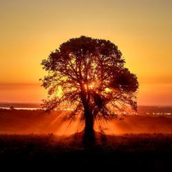 Strom symbolizuje hermetický zákon - Jak nahoře, tak i dole
